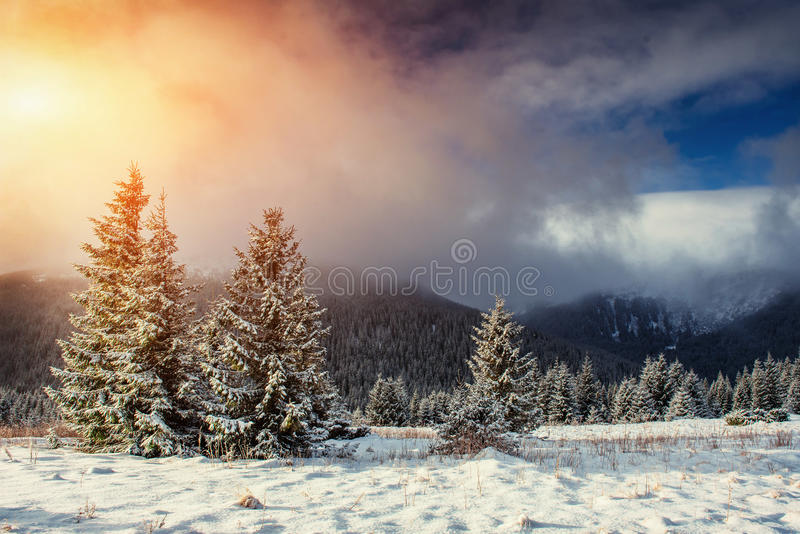 Mysterious Winter landscape with fog, majestic mountains. In the winter. Sunset. Carpathian, Ukraine, Europe. Happy New Year. In anticipation of the holidays royalty free stock photos