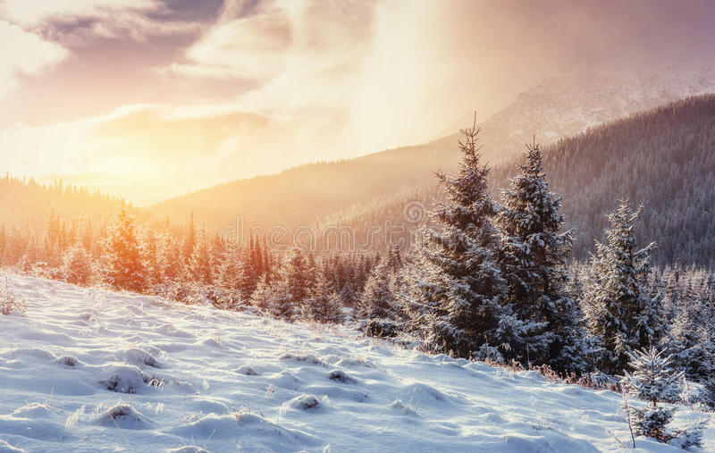 Mysterious Winter landscape with fog, majestic mountains. In the winter. Sunset. Carpathian, Ukraine, Europe. Happy New Year. In anticipation of the holidays stock image