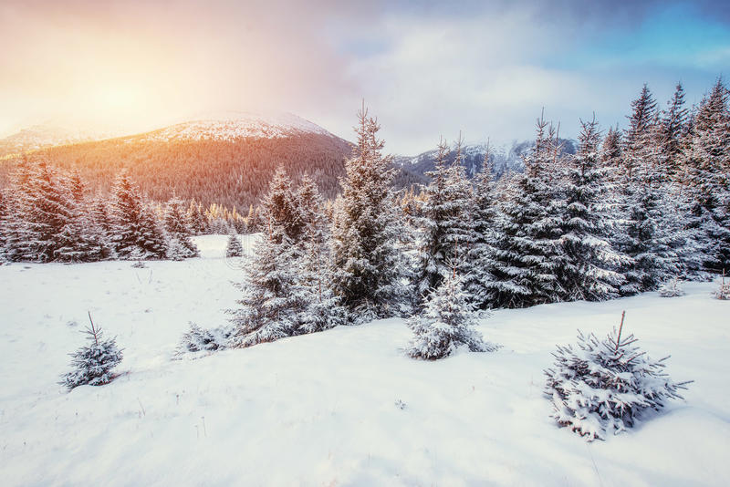 Mysterious Winter landscape with fog, majestic mountains. In the winter. Sunset. Carpathian, Ukraine, Europe. Happy New Year. In anticipation of the holidays royalty free stock photography