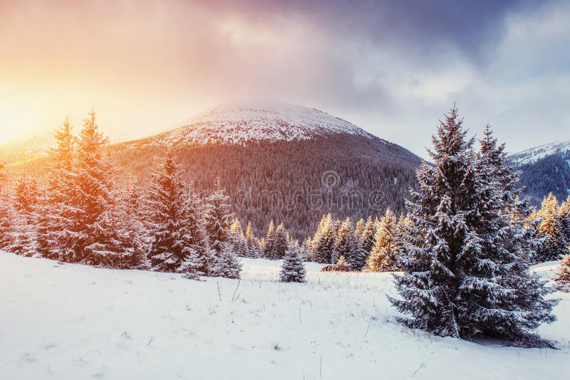 Mysterious Winter landscape with fog, majestic mountains. In the winter. Sunset. Carpathian, Ukraine, Europe. Happy New Year. In anticipation of the holidays stock images