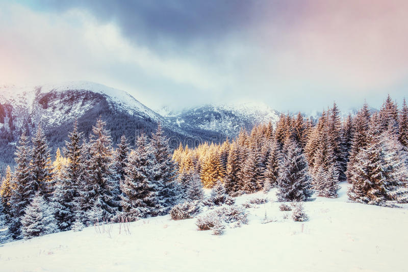 Mysterious Winter landscape with fog, majestic mountains. In the winter. Sunset. Carpathian, Ukraine, Europe. Happy New Year. In anticipation of the holidays stock photo