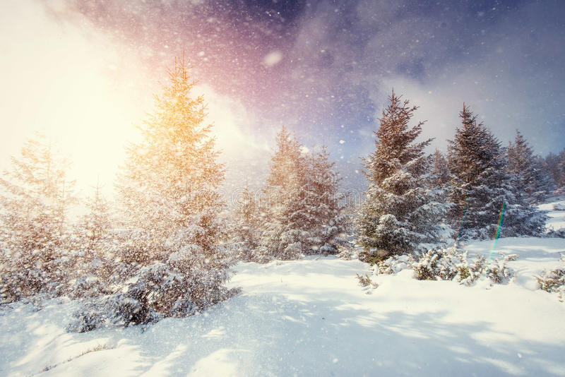 Mysterious Winter landscape with fog, majestic mountains. In the winter. Sunset. Magic winter snow covered tree. Carpathian, Ukraine, Europe royalty free stock photos