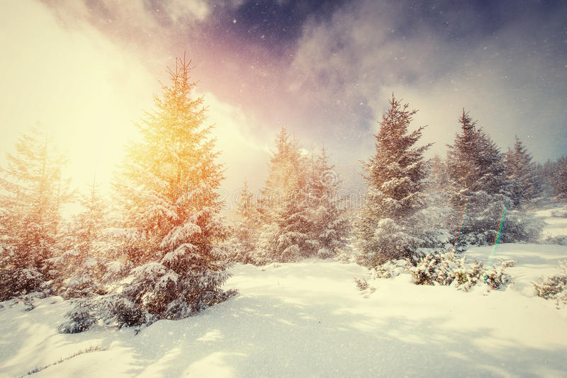 Mysterious Winter landscape with fog, majestic mountains. In the winter. Sunset. Magic winter snow covered tree. Carpathian, Ukraine, Europe royalty free stock image