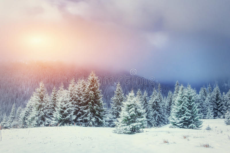 Mysterious Winter landscape with fog, majestic mountains in the. Winter. Sunset. Magic winter snow covered tree. Carpathian, Ukraine, Europe stock photos