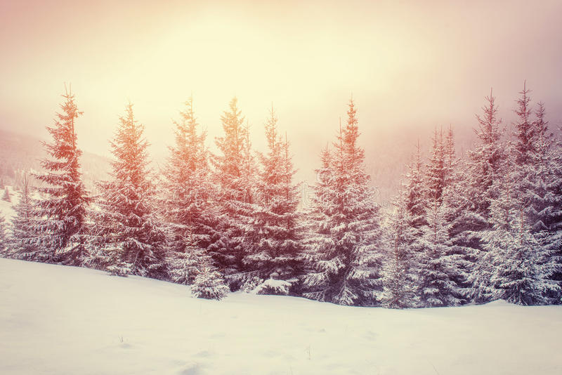 Mysterious winter landscape majestic mountains. In winter. Magical winter snow covered tree. Carpathian, Ukraine, Europe. Instagram toning effect stock image