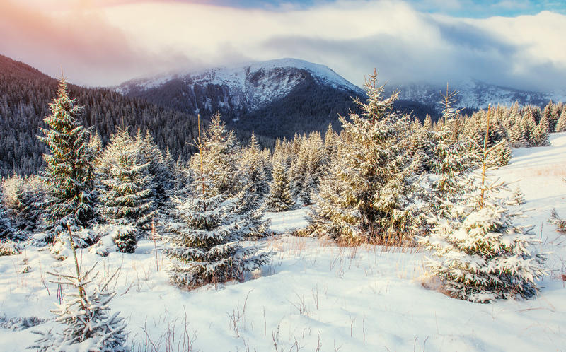 Mysterious winter landscape majestic mountains. In winter. Magical winter snow covered tree. Europe. Happy New Year. In anticipation of the holidays royalty free stock image