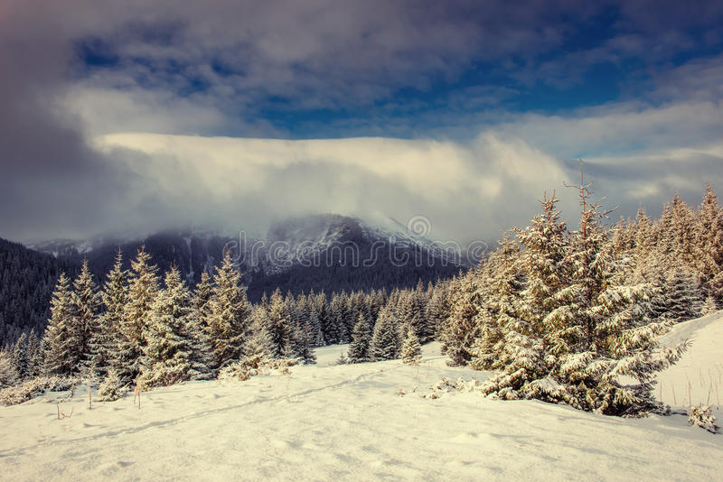 Mysterious winter landscape majestic mountains. In winter. Magical winter snow covered tree. Europe. Happy New Year. In anticipation of the holidays royalty free stock photography