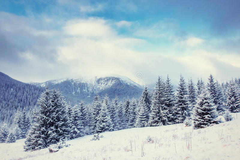 Mysterious winter landscape majestic mountains. In winter. Magical winter snow covered tree. Europe. Happy New Year. In anticipation of the holidays stock photos