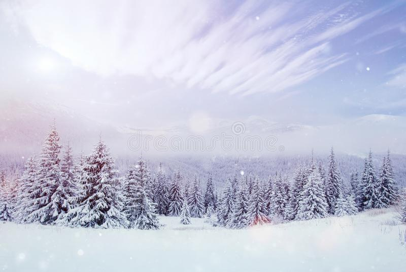 Mysterious winter landscape majestic mountains in the winter. Nice thick fog. Magical winter snow covered tree. Photo stock images