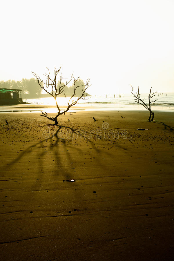 Download Mystery Balding Trees Royalty Free Stock Photography - Image: 12270207