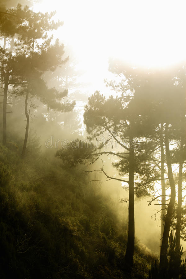 Download Mystery forest stock photo. Image of range, mountain - 11021512