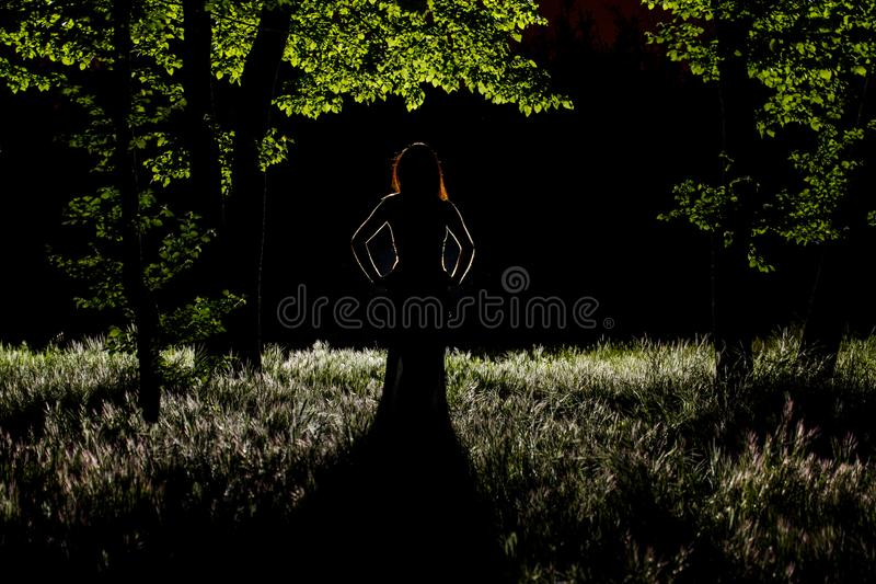 Mystery in the forest royalty free stock photo