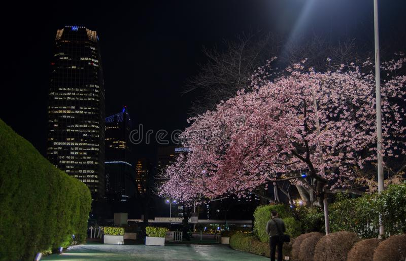 Mystery garden with Cherry Blossoms at night in Tokyo. Japan stock photos