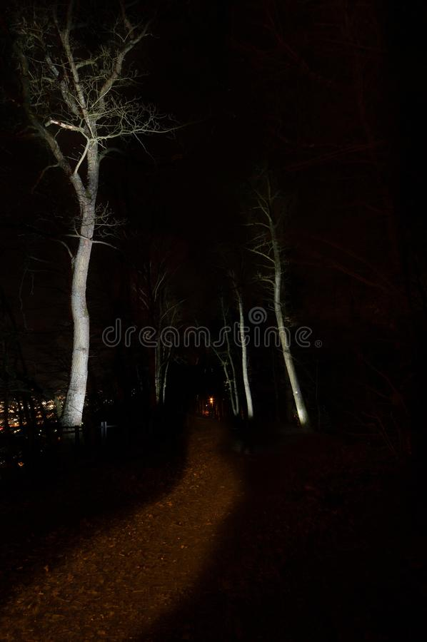 Mystery light path. Through forest in winter night stock images