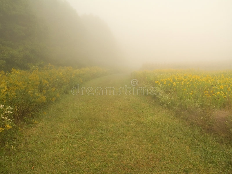 Download Mystery Path Royalty Free Stock Photo - Image: 267025