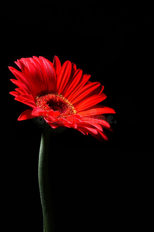 Download Mystery red flower stock image. Image of stalk, mystery - 27102905