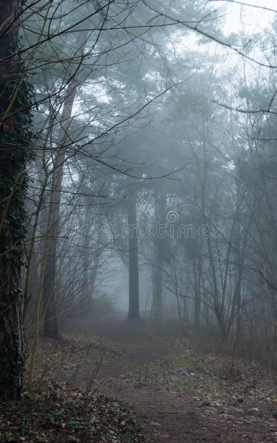Mystery spooky forest path. At evening royalty free stock photos