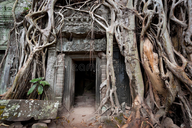 Mystery Of Ta Prohm Stock Photography