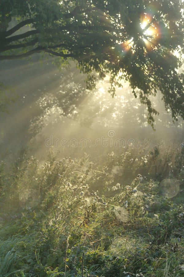 Mystic autumn royalty free stock images