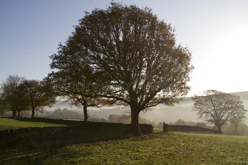 Download Mystic Dawn stock image. Image of tree, england, nature - 26128905