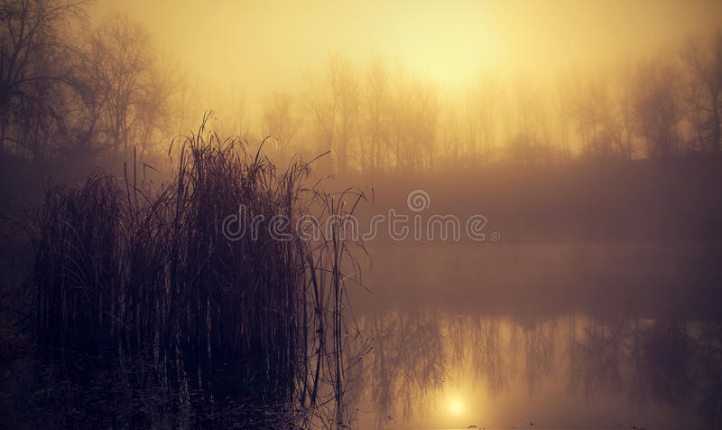 Mystic fantasy lake in the forest stock image