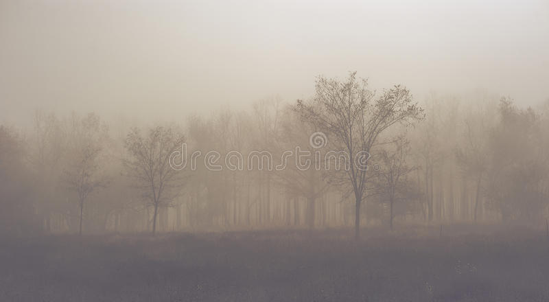 Mystic forest royalty free stock images