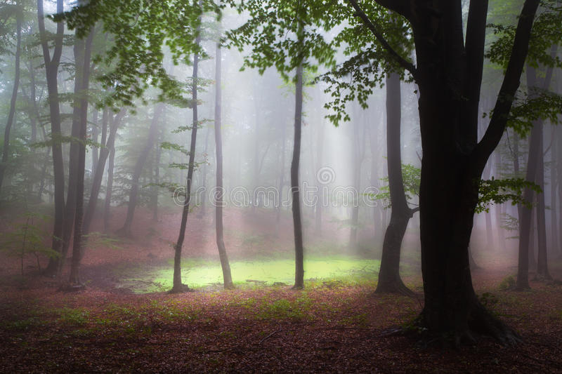 Mystic forest during a foggy day stock image