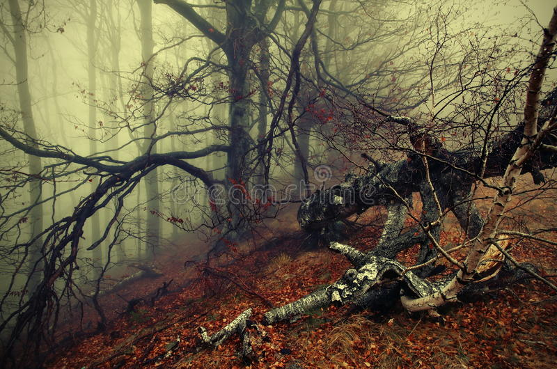 Autumn background and fog. Colored mystic forest. Autumn landscape. Autumn background and fog. Colored foggy mystic forest, haunted by ghosts and unknown royalty free stock image