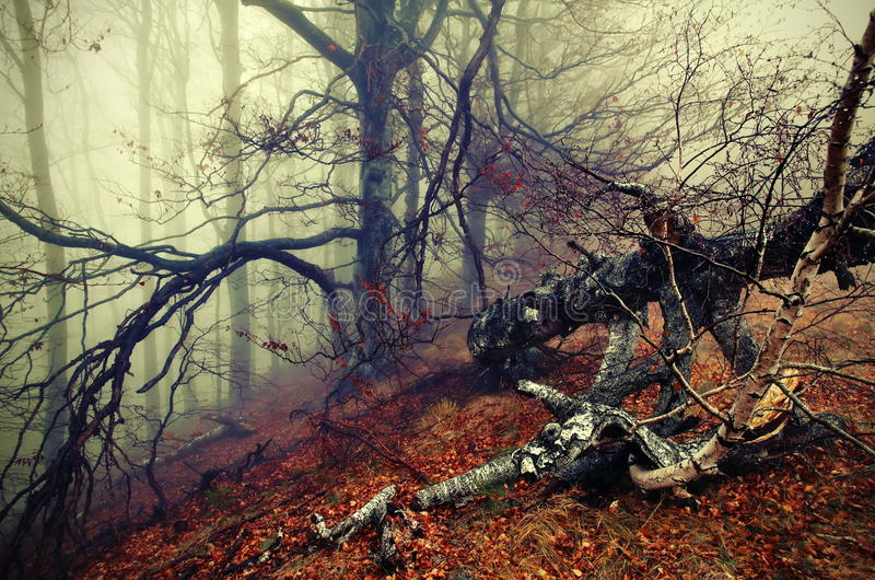 Autumn landscape and fog. Colored mystic forest. Autumn background. Autumn landscape and fog. Colored foggy mystic forest, haunted by ghosts and unknown stock photography
