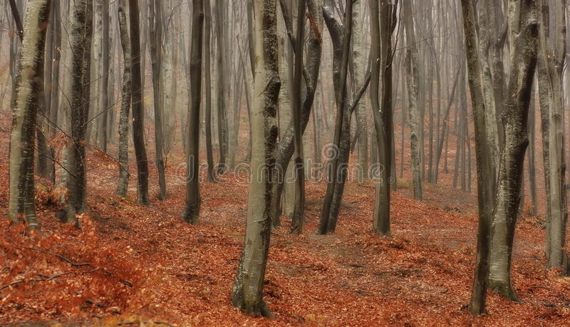 Autumn landscape. Mystic colored foggy forest. Autumn background. Autumn landscape. Mystic colored foggy forest, haunted by ghosts and unknown witchcraft. Autumn royalty free stock photography