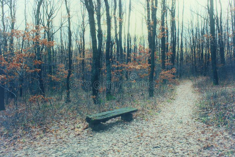 Mystic forest with pathway, bare trees and fallen leaves stock images