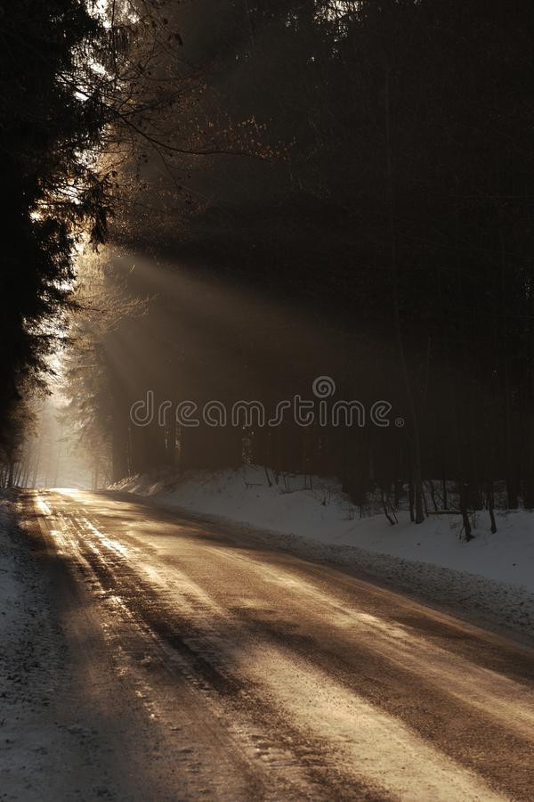 Mystic forest road. Track in forest beautiful sun light shining through the mist stock image