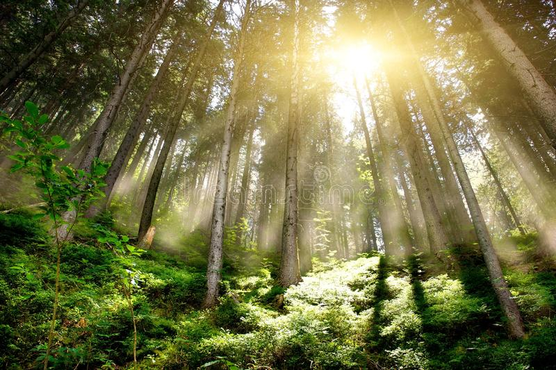 Mystic Forrest royalty free stock image