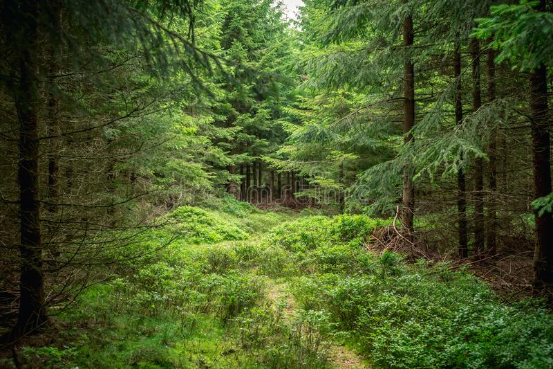 Mystic forrest path spooky creepy trail cloudy summer stock photo