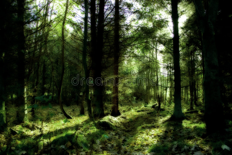 Download Mystic green forest stock photo. Image of forest, pine - 4347530