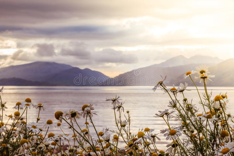 Mystic landscape lake scenery in Scotland: Cloudy sky, flowers and lake with sunbeams, mountain range in the background. Loch royalty free stock photos