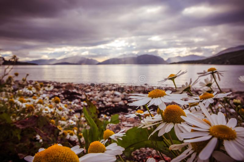 Mystic landscape lake scenery in Scotland: Cloudy sky, flowers and lake with sunbeams, mountain range in the background. Loch. Beautiful mystic landscape lake stock photography