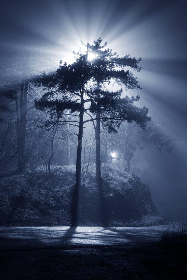 Free Mystic Lights Stock Photography - 8130692
