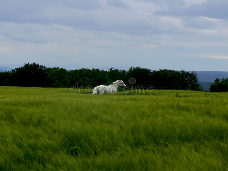 Mystic Mare royalty free stock images