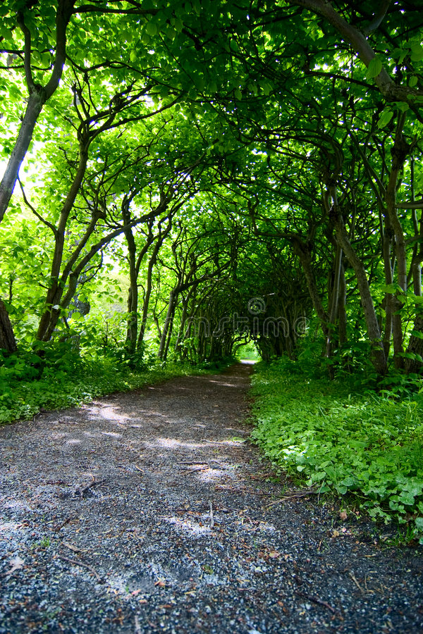 Download Mystic Path stock photo. Image of botanical, green, fairy - 4710706