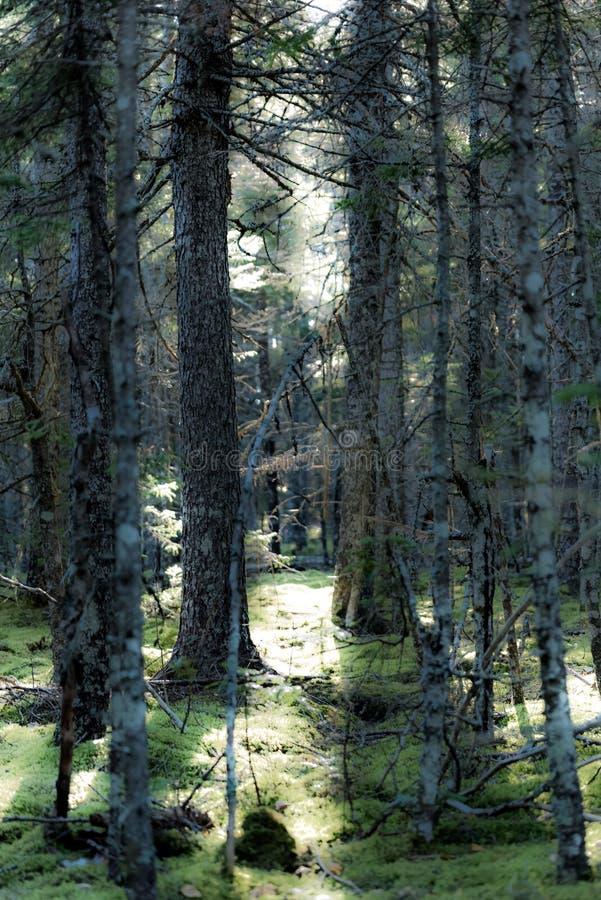 Mystic skog royaltyfria foton
