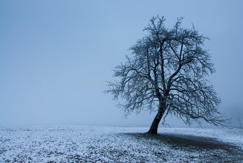 Mystic Tree Stock Photo
