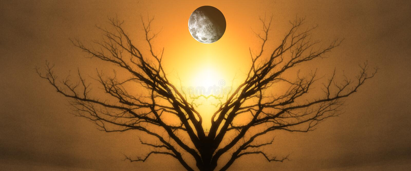 Tree of Life royalty free stock images