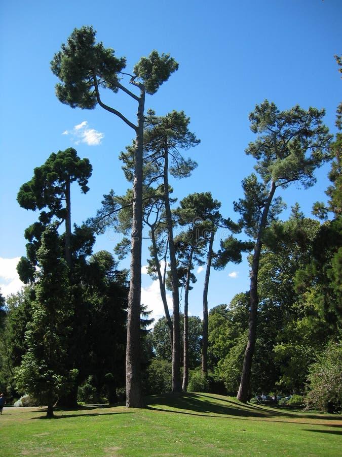 mystic trees royaltyfri bild