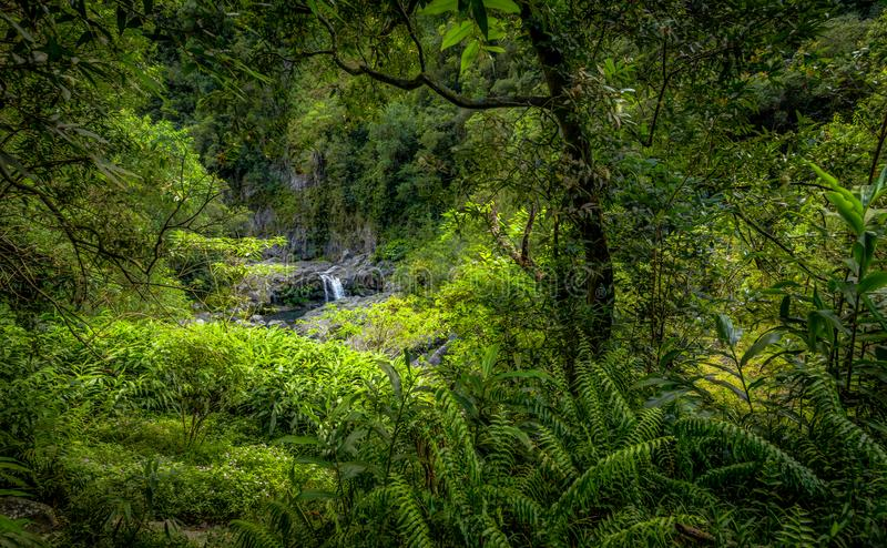 Cirque de Salazie in La reunion. Mystic waterfall seen through the lush vegetation. great hike, Cirque de Salazie in La reunion royalty free stock photography