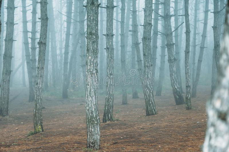 Mysticalб, dramatic fog in forest royalty free stock photography