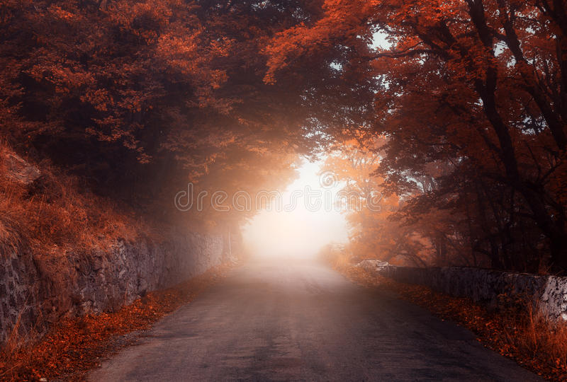 Mystical autumn forest with road in fog. Fall misty woods. Colorful landscape with trees, rural road, orange and red foliage, blue fog. Magical road. Autumn royalty free stock photography