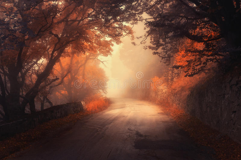 Mystical autumn red forest with road in fog. Fall misty woods. Colorful landscape with trees, rural road, orange and red leaves, and yellow fog. Travel. Autumn royalty free stock images