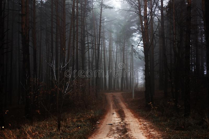 Morning Mystical autumn red forest with road in fog. Fall misty woods. Colorful landscape with trees rural road orange and red lea. Mystical autumn red forest royalty free stock photos