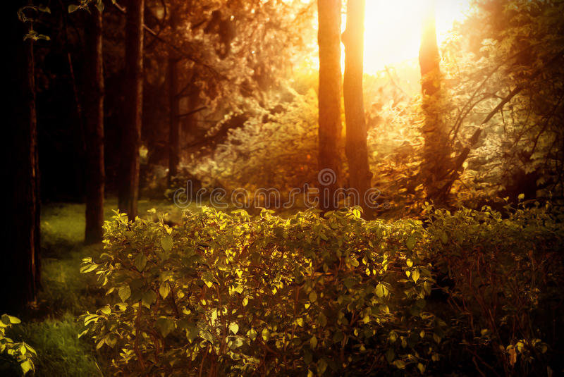 Mystical beautiful dense forest. stock images